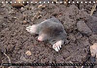 Abneigung und Ekel. Die unbeliebtesten Tiere (Tischkalender 2019 DIN A5 quer) - Produktdetailbild 10