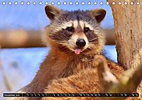 Abneigung und Ekel. Die unbeliebtesten Tiere (Tischkalender 2019 DIN A5 quer) - Produktdetailbild 12