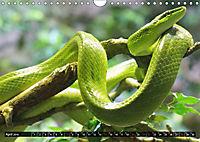 Abneigung und Ekel. Die unbeliebtesten Tiere (Wandkalender 2019 DIN A4 quer) - Produktdetailbild 4