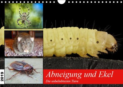 Abneigung und Ekel. Die unbeliebtesten Tiere (Wandkalender 2019 DIN A4 quer), Rose Hurley