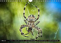 Abneigung und Ekel. Die unbeliebtesten Tiere (Wandkalender 2019 DIN A4 quer) - Produktdetailbild 3