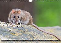 Abneigung und Ekel. Die unbeliebtesten Tiere (Wandkalender 2019 DIN A4 quer) - Produktdetailbild 2
