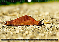 Abneigung und Ekel. Die unbeliebtesten Tiere (Wandkalender 2019 DIN A4 quer) - Produktdetailbild 9
