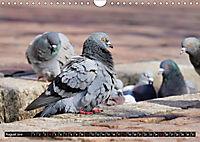 Abneigung und Ekel. Die unbeliebtesten Tiere (Wandkalender 2019 DIN A4 quer) - Produktdetailbild 8