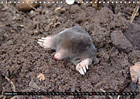 Abneigung und Ekel. Die unbeliebtesten Tiere (Wandkalender 2019 DIN A4 quer) - Produktdetailbild 10
