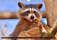 Abneigung und Ekel. Die unbeliebtesten Tiere (Wandkalender 2019 DIN A4 quer) - Produktdetailbild 12