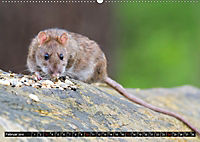 Abneigung und Ekel. Die unbeliebtesten Tiere (Wandkalender 2019 DIN A2 quer) - Produktdetailbild 2