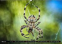 Abneigung und Ekel. Die unbeliebtesten Tiere (Wandkalender 2019 DIN A2 quer) - Produktdetailbild 3