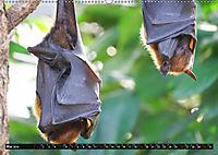 Abneigung und Ekel. Die unbeliebtesten Tiere (Wandkalender 2019 DIN A2 quer) - Produktdetailbild 5