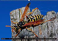 Abneigung und Ekel. Die unbeliebtesten Tiere (Wandkalender 2019 DIN A2 quer) - Produktdetailbild 6