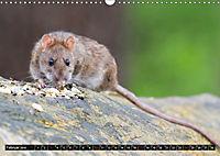 Abneigung und Ekel. Die unbeliebtesten Tiere (Wandkalender 2019 DIN A3 quer) - Produktdetailbild 2