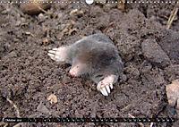 Abneigung und Ekel. Die unbeliebtesten Tiere (Wandkalender 2019 DIN A3 quer) - Produktdetailbild 10
