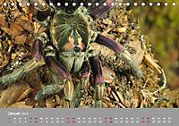 Achtbeinige Exoten (Tischkalender 2019 DIN A5 quer) - Produktdetailbild 1