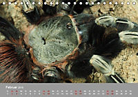 Achtbeinige Exoten (Tischkalender 2019 DIN A5 quer) - Produktdetailbild 2