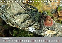 Achtbeinige Exoten (Tischkalender 2019 DIN A5 quer) - Produktdetailbild 11