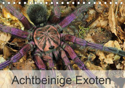 Achtbeinige Exoten (Tischkalender 2019 DIN A5 quer), Wolfgang Kairat dewolli.de