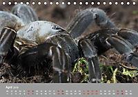 Achtbeinige Exoten (Tischkalender 2019 DIN A5 quer) - Produktdetailbild 4
