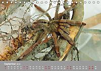 Achtbeinige Exoten (Tischkalender 2019 DIN A5 quer) - Produktdetailbild 9
