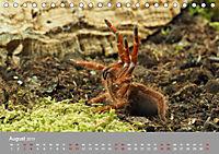 Achtbeinige Exoten (Tischkalender 2019 DIN A5 quer) - Produktdetailbild 8