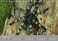 Achtbeinige Exoten (Tischkalender 2019 DIN A5 quer) - Produktdetailbild 10