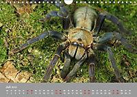 Achtbeinige Exoten (Wandkalender 2019 DIN A4 quer) - Produktdetailbild 2