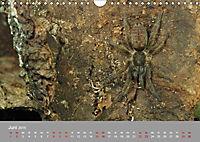 Achtbeinige Exoten (Wandkalender 2019 DIN A4 quer) - Produktdetailbild 3