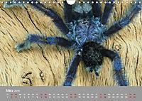Achtbeinige Exoten (Wandkalender 2019 DIN A4 quer) - Produktdetailbild 9