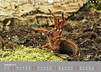 Achtbeinige Exoten (Wandkalender 2019 DIN A4 quer) - Produktdetailbild 8