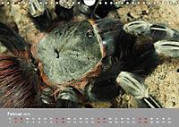 Achtbeinige Exoten (Wandkalender 2019 DIN A4 quer) - Produktdetailbild 13