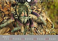Achtbeinige Exoten (Wandkalender 2019 DIN A4 quer) - Produktdetailbild 12