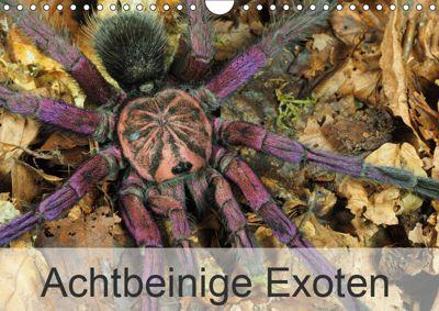 Achtbeinige Exoten (Wandkalender 2019 DIN A4 quer), Wolfgang Kairat dewolli.de