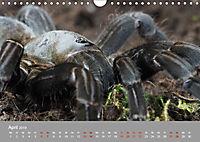 Achtbeinige Exoten (Wandkalender 2019 DIN A4 quer) - Produktdetailbild 4