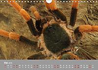 Achtbeinige Exoten (Wandkalender 2019 DIN A4 quer) - Produktdetailbild 5