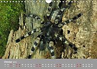 Achtbeinige Exoten (Wandkalender 2019 DIN A4 quer) - Produktdetailbild 10