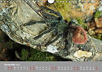 Achtbeinige Exoten (Wandkalender 2019 DIN A4 quer) - Produktdetailbild 11