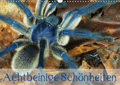 Achtbeinige Schönheiten (Wandkalender 2019 DIN A3 quer), Wolfgang Kairat - dewolli.de
