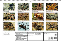 Achtbeinige Schönheiten (Wandkalender 2019 DIN A3 quer) - Produktdetailbild 13