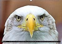 Adler und Greife - Könige des Himmels (Wandkalender 2018 DIN A2 quer) - Produktdetailbild 3