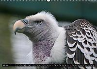 Adler und Greife - Könige des Himmels (Wandkalender 2018 DIN A2 quer) - Produktdetailbild 7
