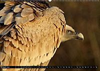 Adler und Greife - Könige des Himmels (Wandkalender 2018 DIN A2 quer) - Produktdetailbild 4