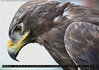 Adler und Greife - Könige des Himmels (Wandkalender 2018 DIN A2 quer) - Produktdetailbild 2
