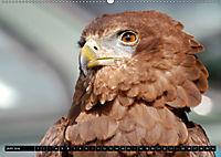 Adler und Greife - Könige des Himmels (Wandkalender 2018 DIN A2 quer) - Produktdetailbild 6
