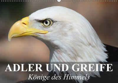 Adler und Greife - Könige des Himmels (Wandkalender 2018 DIN A2 quer), Elisabeth Stanzer