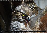 Adler und Greife - Könige des Himmels (Wandkalender 2018 DIN A2 quer) - Produktdetailbild 1