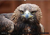 Adler und Greife - Könige des Himmels (Wandkalender 2018 DIN A2 quer) - Produktdetailbild 9