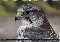 Adler und Greife - Könige des Himmels (Wandkalender 2018 DIN A2 quer) - Produktdetailbild 8