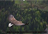 Adler und Greife - Könige des Himmels (Wandkalender 2018 DIN A2 quer) - Produktdetailbild 12