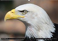 Adler und Greife - Könige des Himmels (Wandkalender 2018 DIN A2 quer) - Produktdetailbild 11