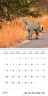 Adventure South Africa 2019 (Wall Calendar 2019 300 × 300 mm Square) - Produktdetailbild 5