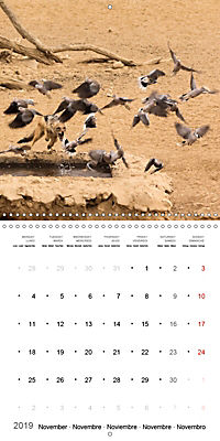 Adventure South Africa 2019 (Wall Calendar 2019 300 × 300 mm Square) - Produktdetailbild 11